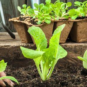 Spezialmittel für Haus und Garten