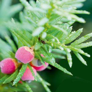 Spezielle Dünger / Pflanzenhilfsmittel