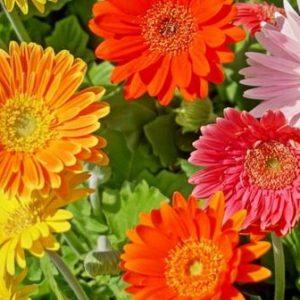 Pflege für Topf- und Schnittblumen